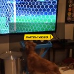 Dog Loves Watching The World Cup