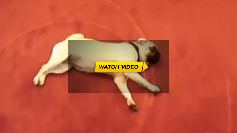 Dogs Playing Dead