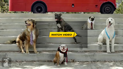 Dog Version: One Direction – One Thing