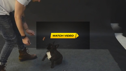 Dogs React To Magic Trick