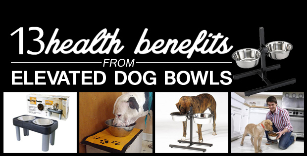 13 Health Benefits From Elevated Dog Bowls