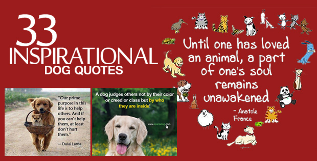 33 Inspirational Dog Quotes