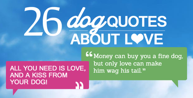 26 Dog Quotes About Love And Compassion